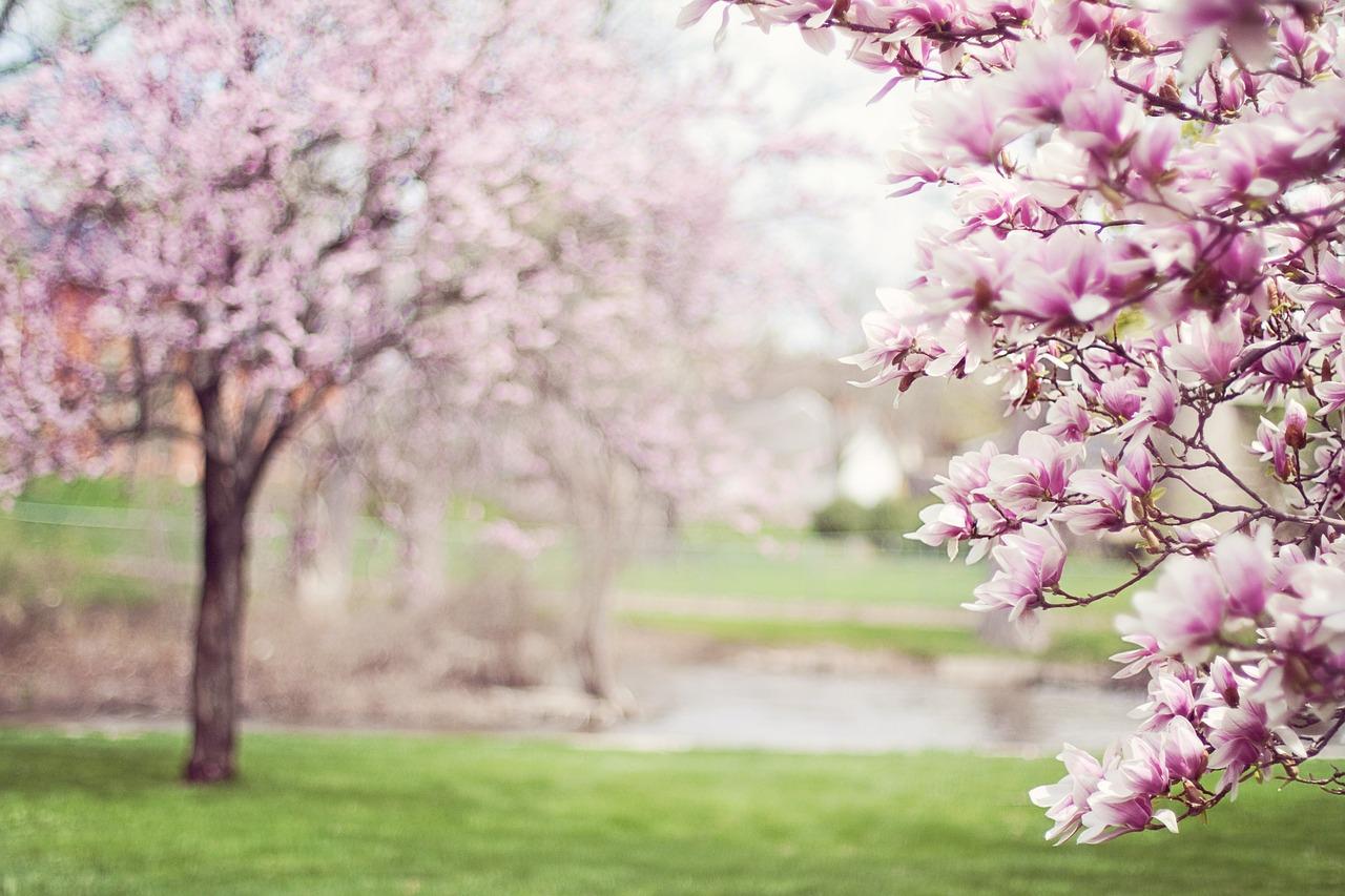 Tratamientos estéticos para primavera